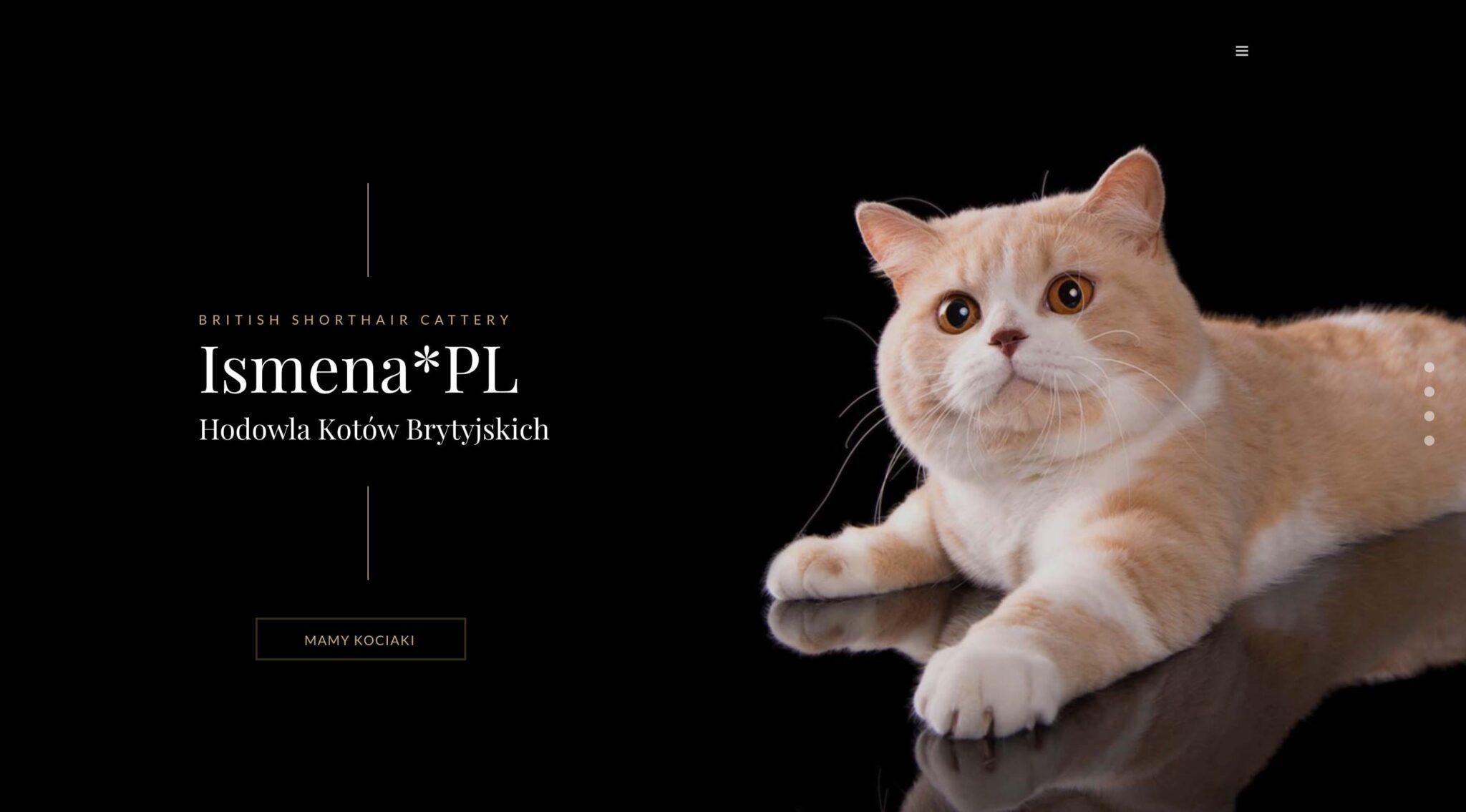 Strony dla hodowli - Projekt strony dla hodowli kotów